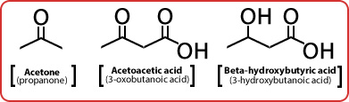 MCAT Biochemistry Macromolecules - The Three Ketone Bodies