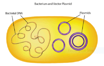 MCAT Biochemistry Biotechnology - Bacterial DNA and Plasmids