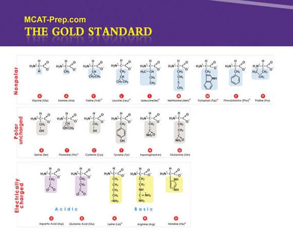 Mcat Biochemistry Review Summary | Gold Standard Mcat Prep